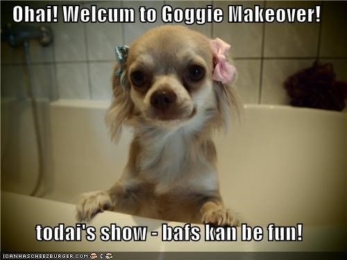 bath,bath time,baths can be fun,chihuahua,makeover,talk show host,tv show
