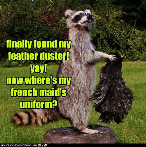 animals,costume,dress up,feather duster,french maid,maid,raccoon