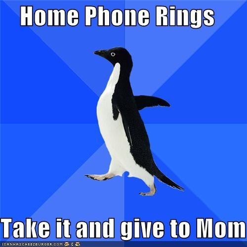 home,mom,phone,rings,socially awkward penguin