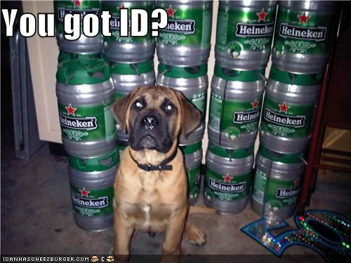 alcohol,beer,booze,carded,drinking,getting carded,guard,id,mastiff