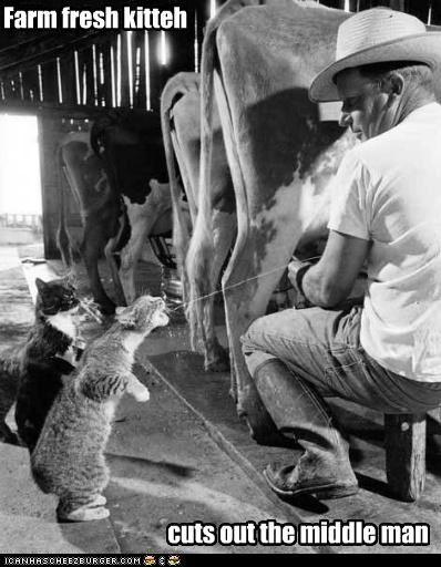 Farm fresh kitteh cuts out the middle man
