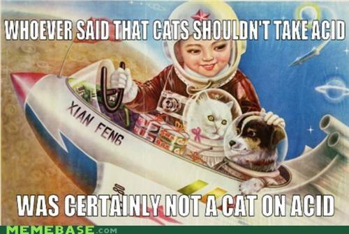 acid dogs gateway drug Memes space what - 5351675904