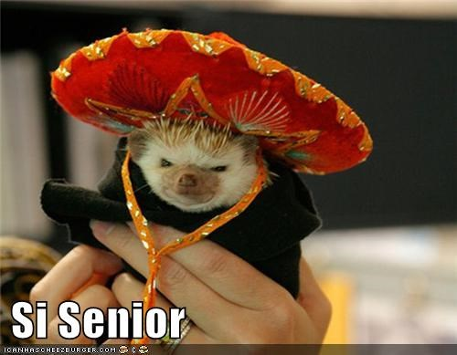 best of the week,caption,captioned,costume,dressed up,hedgehog,senor,si,sombrero