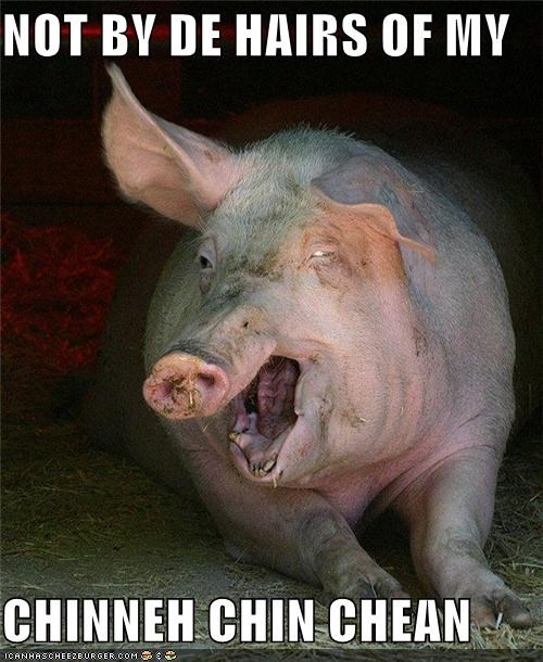 animals fairy tale not by the hairs of my chiny chin chin pig story three little pigs - 5352210176
