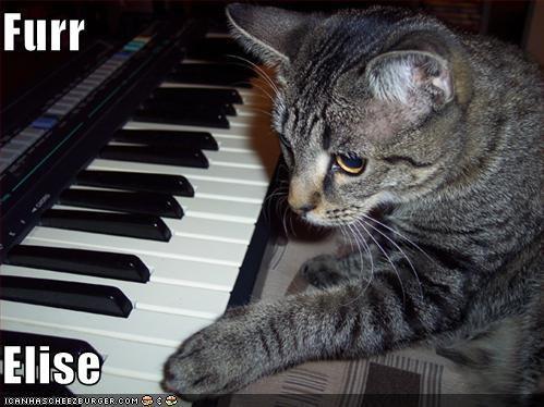 lolcats Music piano - 535230720