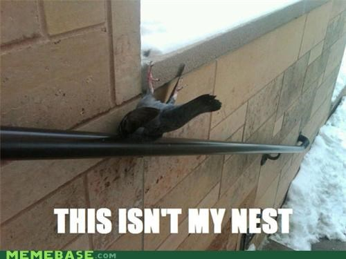 birds Memes nest Sad this-isnt-my - 5352502016
