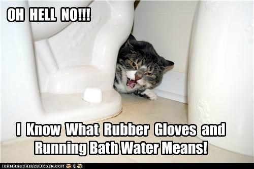 bath bathroom caption captioned cat do not want hell no hiding meaning means no rubber gloves running toilet upset water