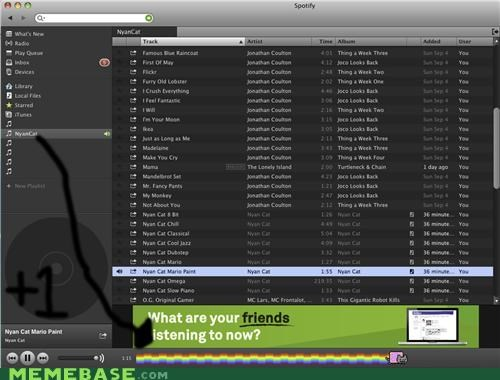 bar,Music,Nyan Cat,spotify,what
