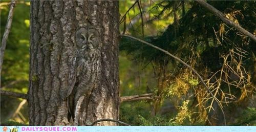 acting like animals blending in camouflage coloration Hall of Fame hiding Owl pun puns tree