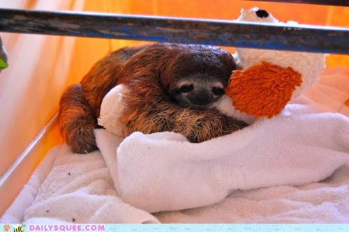 baby cuddling holding hugging Indiana Jones juxtaposition puppy reference replacement sloth stuffed animal swap