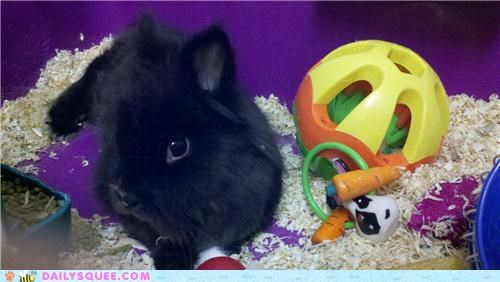 bunny,happy bunday,namesake,rabbit,reader squees,the wizard of oz