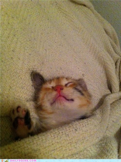 asleep,baby,cat,dreaming,dreams,happy,kitten,nap,nap time,reader squees,sleeping,sweet,tucked in