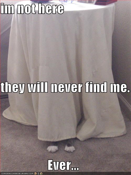 caption captioned cat ever FAIL feet here hiding me never not obvious tablecloth they will - 5354090240