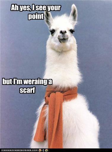 animals,argument invalid,clothing,fashion,i see your point,Invalid Argument,llama,scarf,yes quite