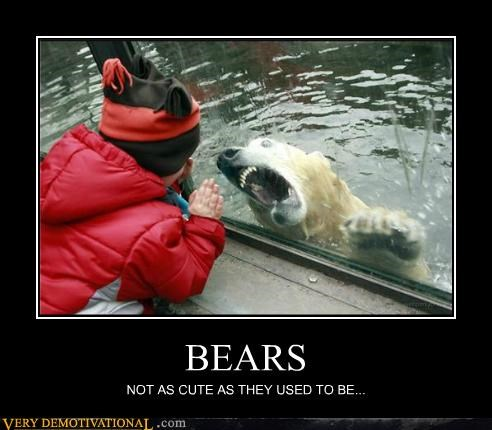 BEARS NOT AS CUTE AS THEY USED TO BE...