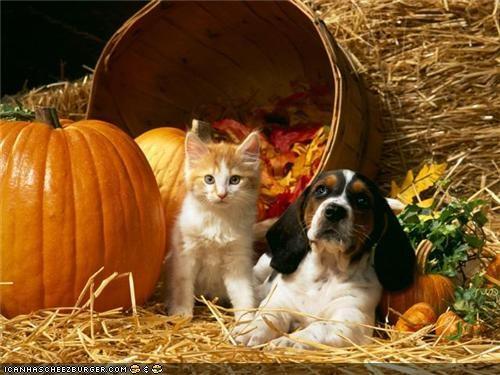autumn dogs goggies goggies r owr friends halloween Interspecies Love meowloween pumpkins - 5355271680