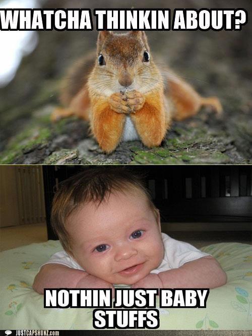 adorbz,baby,baby stuffs,squirrel,thinking about,whatcha thinkin about