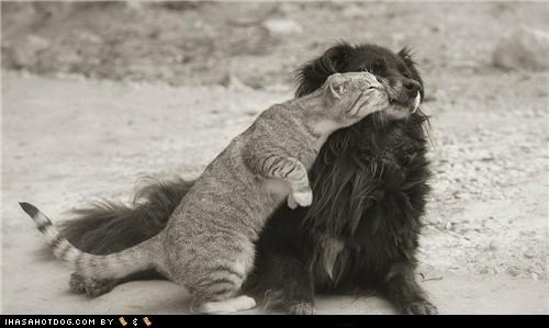 adorbz cat friends friendship KISS kittehs r owr friends love mixed breed whatbreed - 5355469056