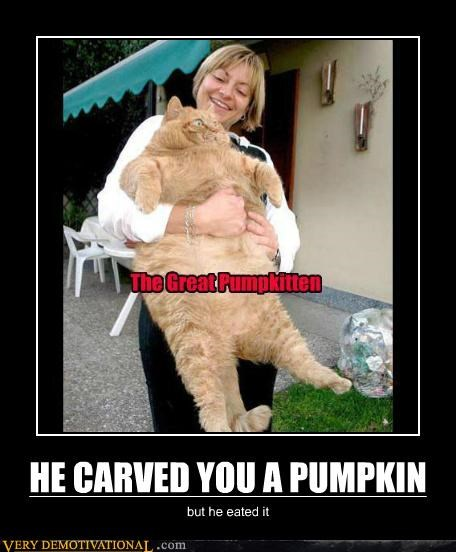 cat great pumpkin halloween huge Terrifying - 5355673088