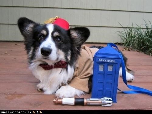 around the interwebs,corgis,costume,doctor who,halloween