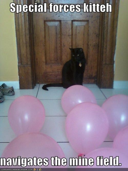 Balloons,caption,captioned,cat,field,forces,mine,navigates,special