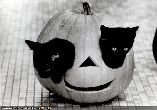 basement cat,cyoot kitteh of teh day,halloween,jack o lanterns,meowloween,pumpkins,two cats