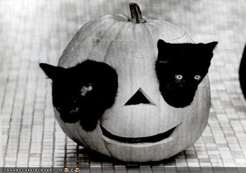 basement cat cyoot kitteh of teh day halloween jack o lanterns meowloween pumpkins two cats - 5356878848