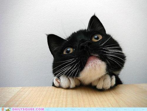 acting like animals angle Awkward camera cat model modeling nervous posing self conscious tricks worried - 5357073408