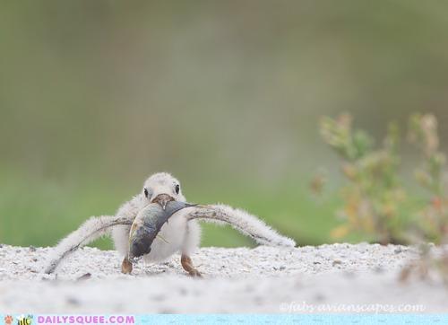 ambitious appetite baby bird do want eating fish nomming noms whatsit whatsit wednesday - 5357193216