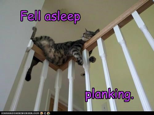 asleep Awkward bannister caption captioned cat fell Planking sleeping stairs - 5357692672