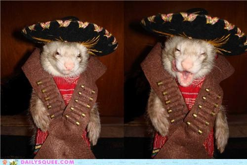 bandit,costume,do not want,dressed up,ferret,Hall of Fame,halloween,pooping,reader squees,revenge,singing,song