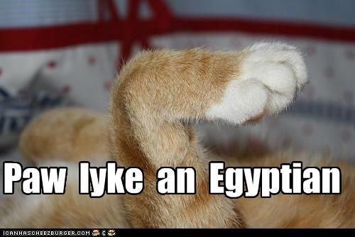 caption captioned cat paw song the bangles walk like an egyptian - 5357927680