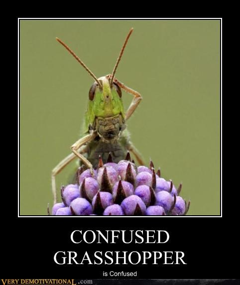 animals confused grasshopper hilarious - 5358137856