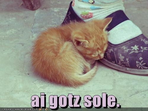 caption captioned cat kitten pun shoe sleeping sole soul tabby - 5358163968