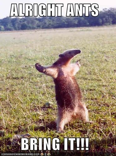 animals anteater bring it bring it on come at me bro