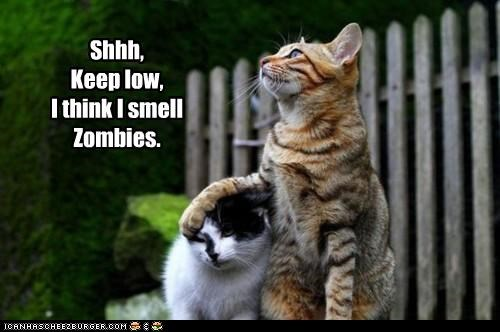 be quiet cat Cats I Can Has Cheezburger shhh shush the threat is real zombie