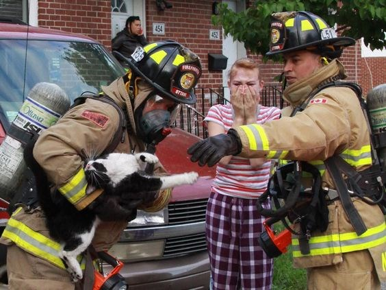 heroes saving firefighters heartwarming photos Cats rescue - 5358597
