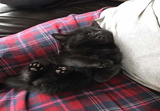 napping cats funny memes kitten cute Memes Cats funny cat memes - 5359109