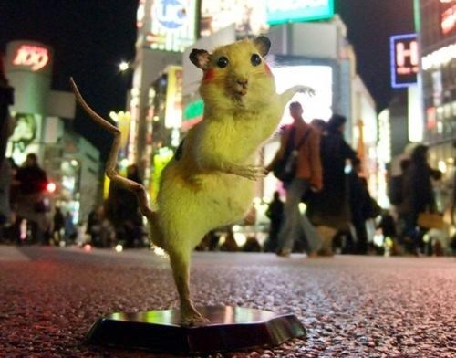 chim pom Japan Nerd News pikachu Pokémon rats super rats taxidermy tv shows video games - 5359494912