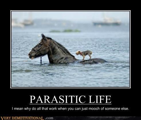 animals,dogs,hilarious,horse,parasite,swimming