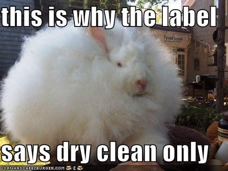 bunny caption captioned dry clean Fluffy label only rabbit reason says this why - 5359823104