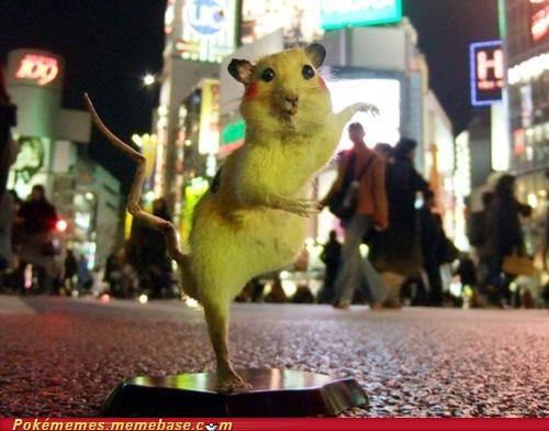 chim pom IRL Japan nope chuck testa pikachu rats resourceful revolting stuffed super rats weird - 5359873792