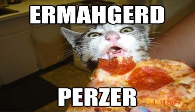 pizza memes dogs pizza dog memes funny memes cute Memes funny cat memes - 5359877