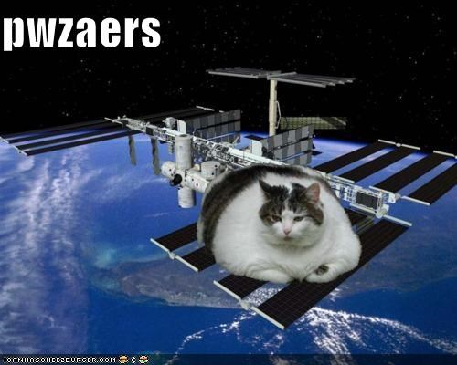 cat I Can Has Cheezburger orbit orbiting outerspace satellite space - 5359926784