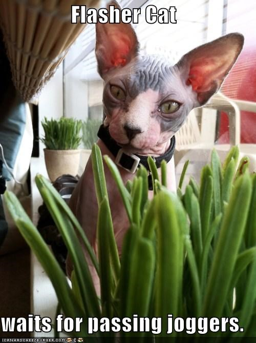 caption captioned cat flasher grass joggers lolwut nekkid passing sphynx wait waiting waits - 5360020224
