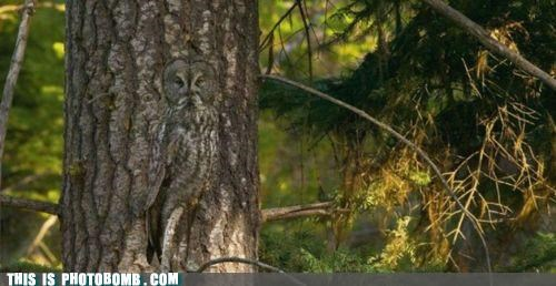 animal awesome best of week hoot nature Owl when you see it - 5360034560
