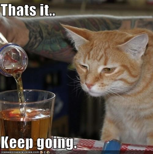 alcohol,best of the week,caption,captioned,cat,drink,going,Hall of Fame,keep,more,tabby,waiting,whiskey