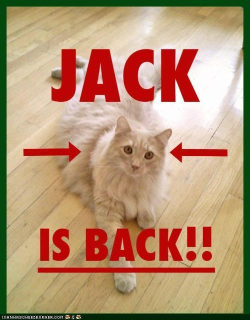 Jack the Cat Is Back!