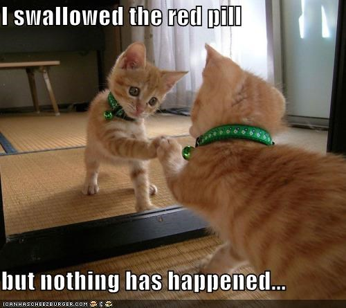 caption,captioned,cat,confused,FAIL,kitten,matrix,mirror,Movie,nothing,pill,red,scene,swallowed,tabby,touching
