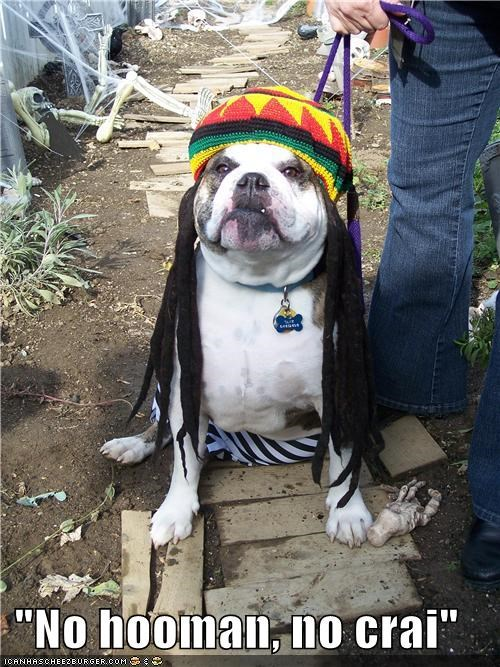 bob marley costume dreadlocks dreads halloween hat Music musician no cry no woman no cry pit bull pitbull reggae